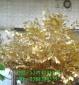 仿真许愿树 白色许愿树定做批发 年底特价许愿树 仿真工艺品